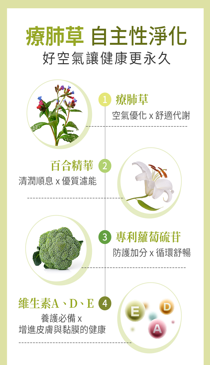 BHK's療肺草採用療肺草萃取物、百合濃縮粉、專利蘿蔔硫苷以及維生素A、D、E,讓體內空氣清新。