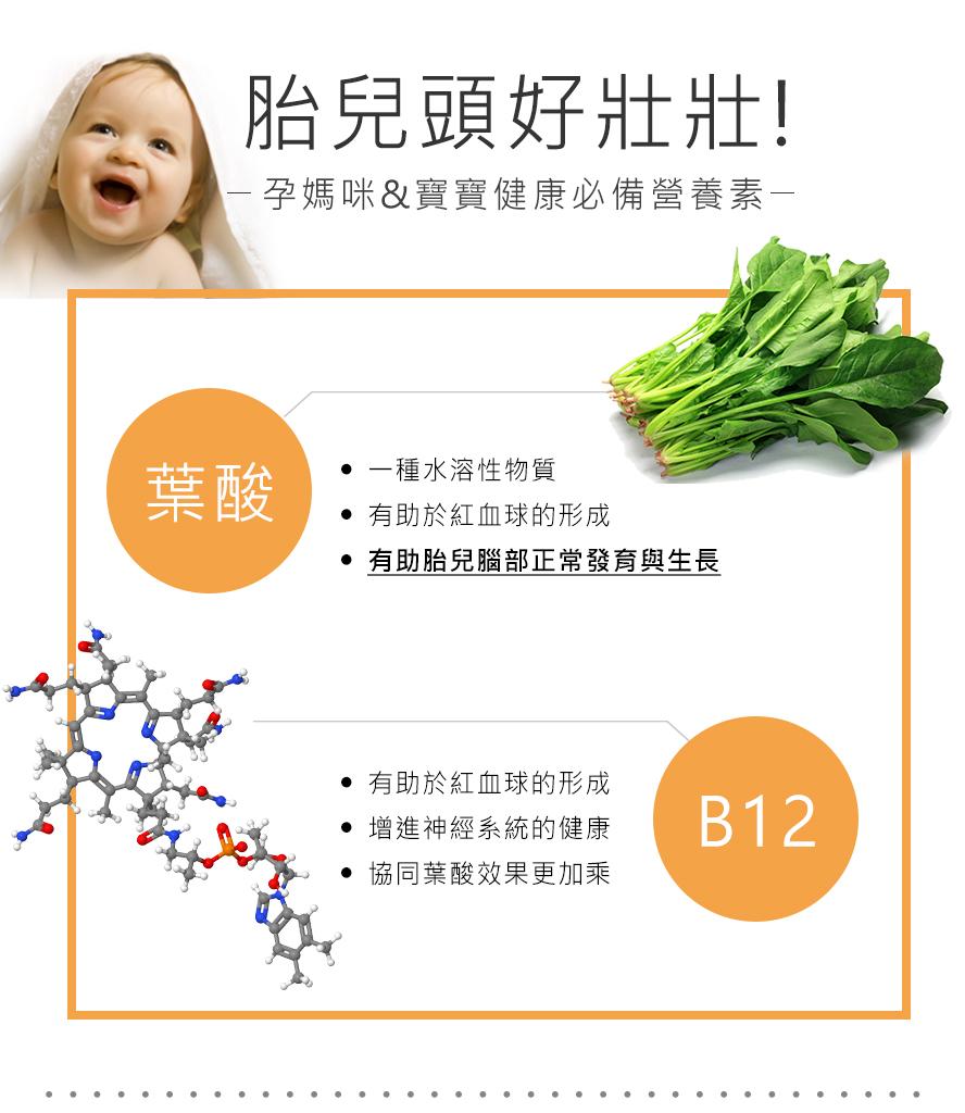 BHK's葉酸幫助胎兒正常發育成長